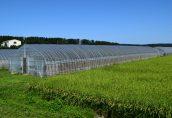生産緑地の継続は相続税のリスクがある?悩んだときの2つの判断基準